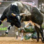 Jess Lockwood and the bulls